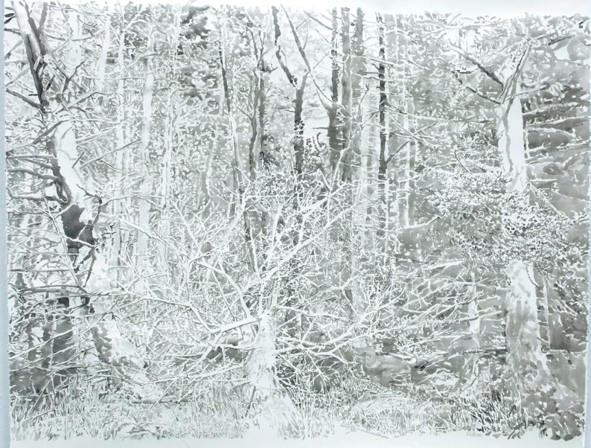 woods-16-b