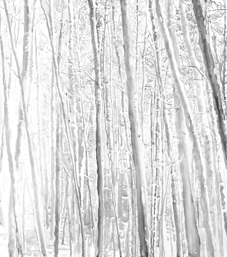 Young forest 2012, Sumi ink on paper, 60 x 53.25 inches